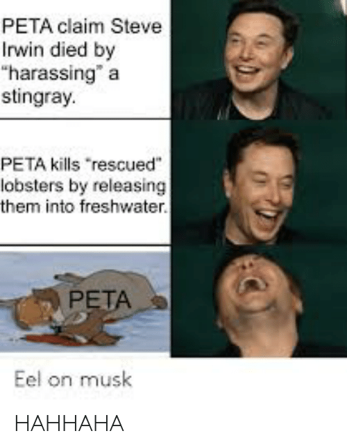 Peta Claim Steve Irwin Died By Harassing A Stingray Peta Kills Rescued Lobsters By Releasing Them Into Freshwater Peta Eel On Musk Hahhaha Steve Irwin Meme On Me Me