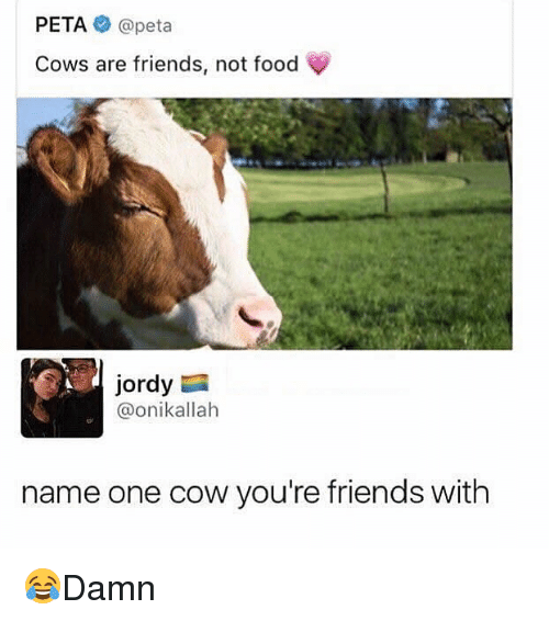 Food, Friends, and Memes: PETA@peta  Cows are friends, not food  Jordy  @onikallah  name one cow you're friends with 😂Damn