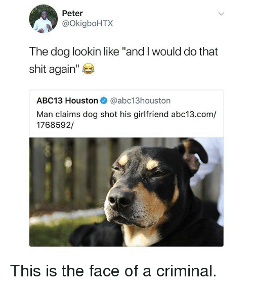 "Memes, Shit, and Abc13: Peter  @OkigboHTX  The dog lookin like ""and I would do that  shit again'""  ABC13 Houston@abc13houston  Man claims dog shot his girlfriend abc13.com/  1768592,/ This is the face of a criminal."