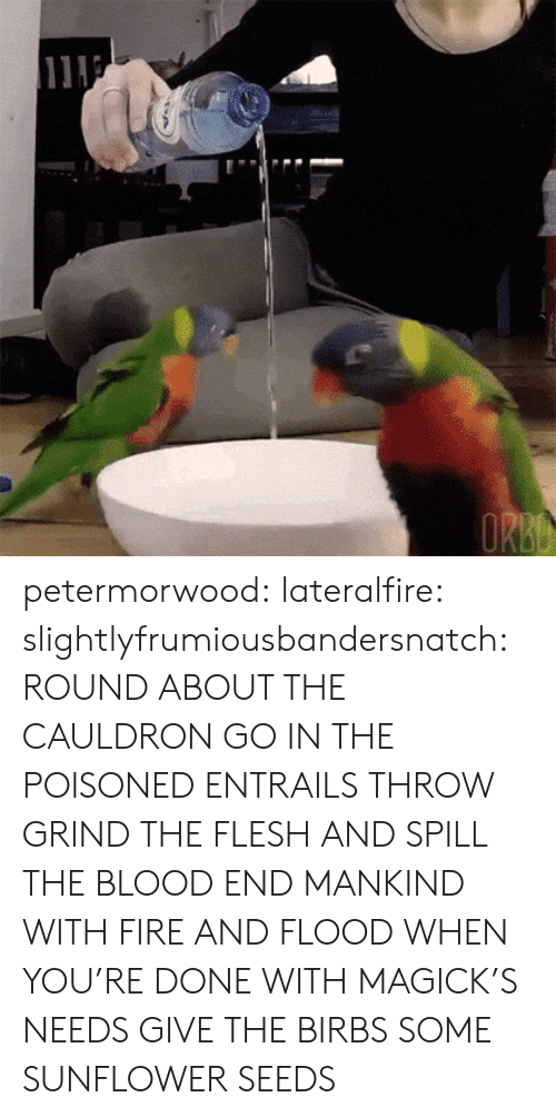 Fire, Tumblr, and Blog: petermorwood: lateralfire:  slightlyfrumiousbandersnatch:  ROUND ABOUT THE CAULDRON GO IN THE POISONED ENTRAILS THROW  GRIND THE FLESH AND SPILL THE BLOOD END MANKIND WITH FIRE AND FLOOD  WHEN YOU'RE DONE WITH MAGICK'S NEEDS GIVE THE BIRBS SOME SUNFLOWER SEEDS