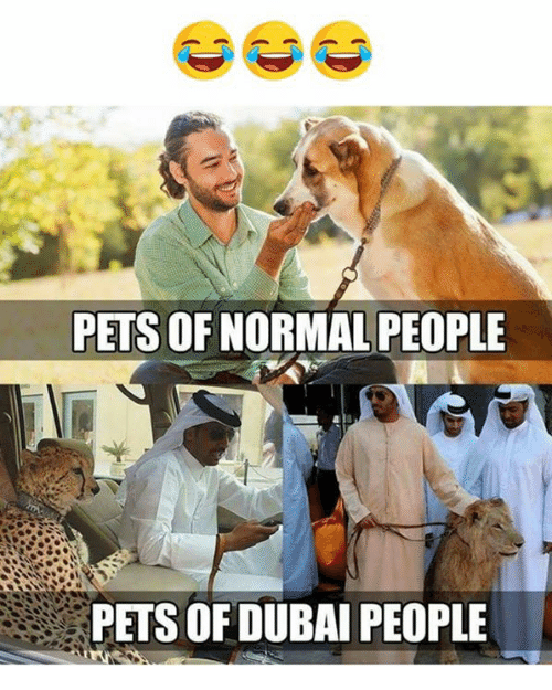 Pets, Dubai, and Normal: PETS OF NORMAL PEOPLE  PETS OF DUBAI PEOPLE