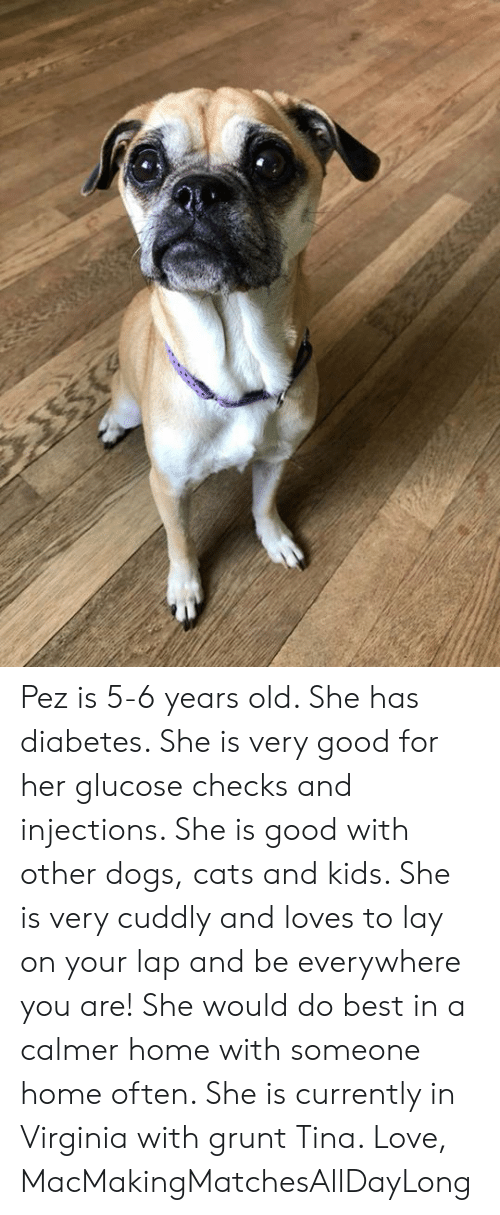 Pez Is 5-6 Years Old She Has Diabetes She Is Very Good for Her