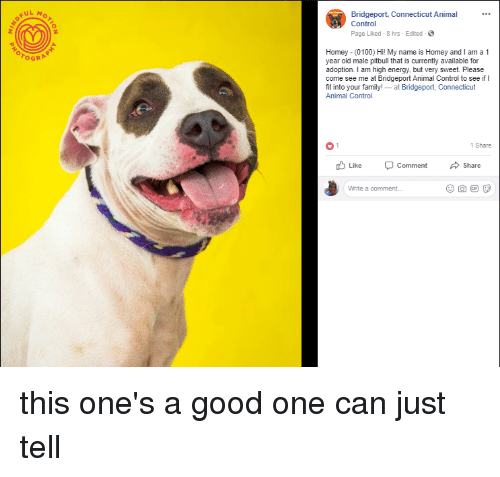 Pful Bridgeport Connecticut Animal Control Page Liked 8 Hrs Edited