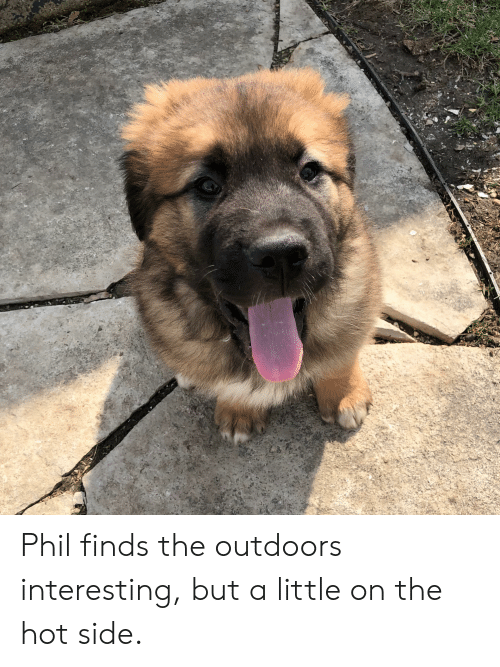 Hot, Side, and Interesting: Phil finds the outdoors interesting, but a little on the hot side.