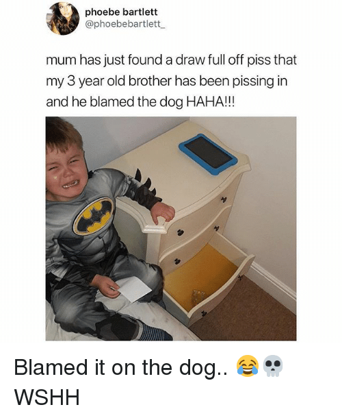 Memes, Wshh, and Old: phoebe bartlett  @phoebebartlett  mum has just found a draw full off piss that  my 3 year old brother has been pissing in  and he blamed the dog HAHA!!! Blamed it on the dog.. 😂💀 WSHH