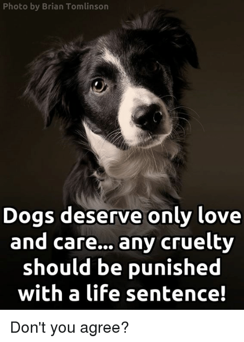 Life, Memes, and 🤖: Photo by Brian Tomlinson  Dogs deserve only love  and care... any cruelty  should be punished  with a life sentence! Don't you agree?