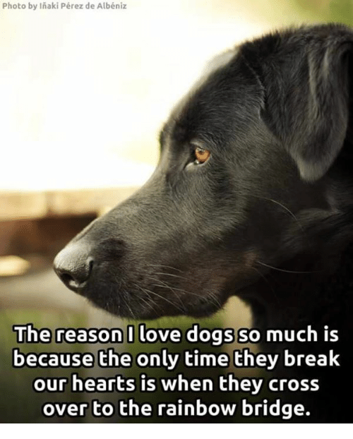 Memes, Cross, and Rainbow: Photo by Inaki Pérez de Albéniz  The reason I love dogs so  much is  because the only time they break  our hearts is when they cross  over to the rainbow bridge.