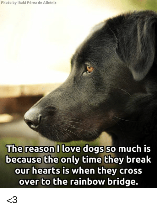 Memes, Cross, and Rainbow: Photo by Inaki Pérez de Albéniz  The reason I love dogs so  much is  because the only time they break  our hearts is when they cross  over to the rainbow bridge. <3