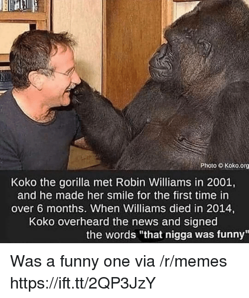 "Funny, Memes, and News: Photo Koko.org  Koko the gorilla met Robin Williams in 2001,  and he made her smile for the first time in  over 6 months. When Williams died in 2014,  Koko overheard the news and signed  the words ""that nigga was funny"" Was a funny one via /r/memes https://ift.tt/2QP3JzY"