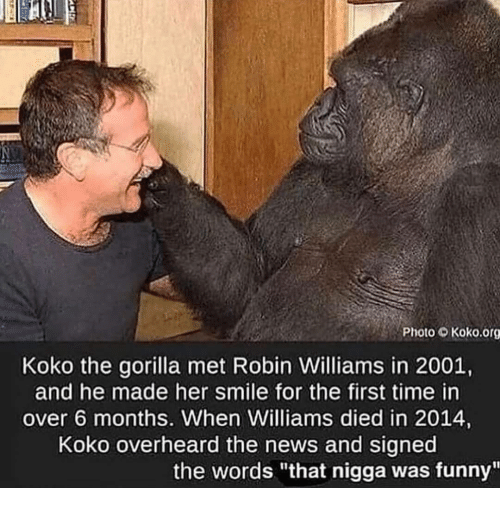 "Funny, News, and Robin Williams: Photo Koko.org  Koko the gorilla met Robin Williams in 2001,  and he made her smile for the first time in  over 6 months. When Williams died in 2014,  Koko overheard the news and signed  the words ""that nigga was funny"""