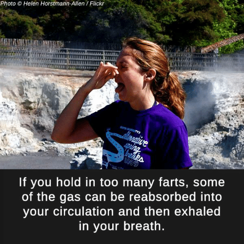 Memes, Flickr, and 🤖: Photo  O Helen Horstmann-Allen Flickr  If you hold in too many farts, some  of the gas can be reabsorbed into  your circulation and then exhaled  in your breath.