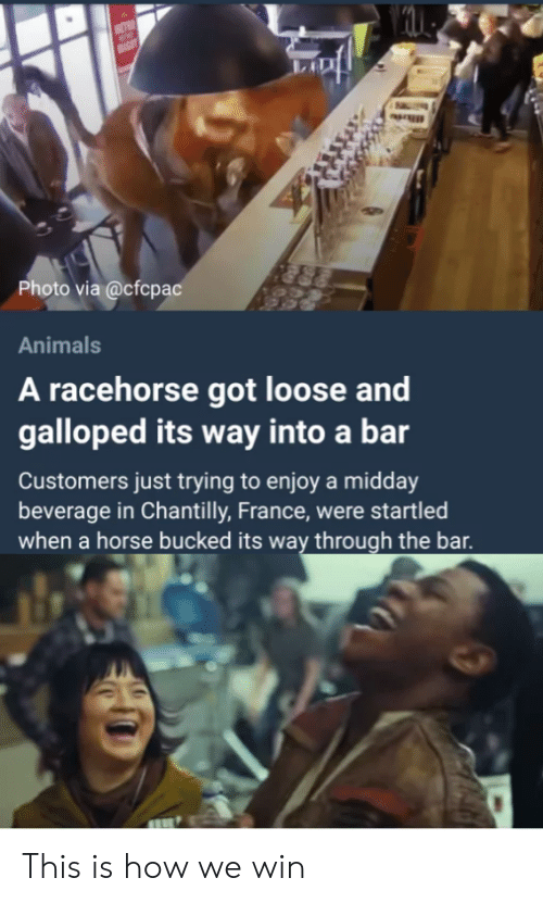 Animals, France, and Horse: Photo via @cfcpac  Animals  A racehorse got loose and  galloped its way into a bar  Customers just trying to enjoy a midday  beverage in Chantilly, France, were startled  when a horse bucked its way through the bar This is how we win
