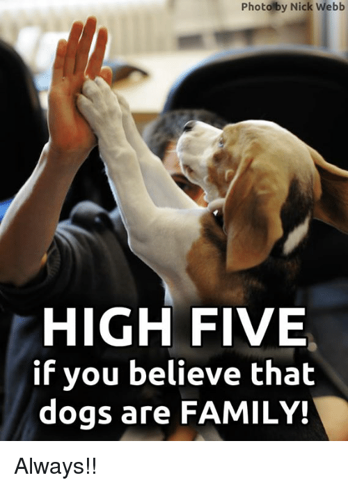 Dogs, Family, and Memes: Photolby Nick Webb  HIGH FIVE  if you believe thalt  dogs are FAMILY! Always!!