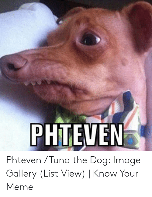 PHTEVEN Phteven Tuna the Dog Image Gallery List View | Know