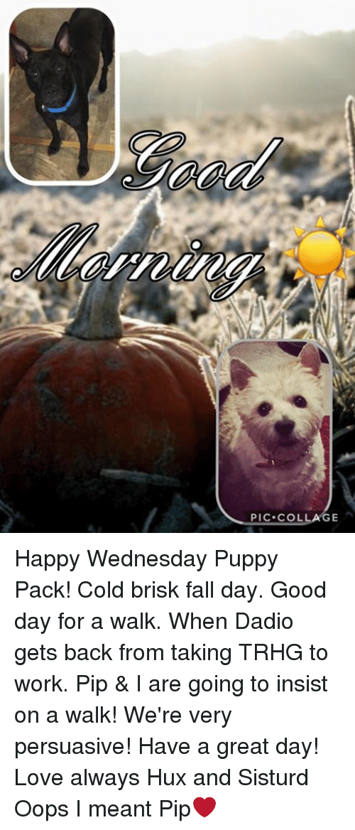 PIC COL Happy Wednesday Puppy Pack! Cold Brisk Fall Day ...