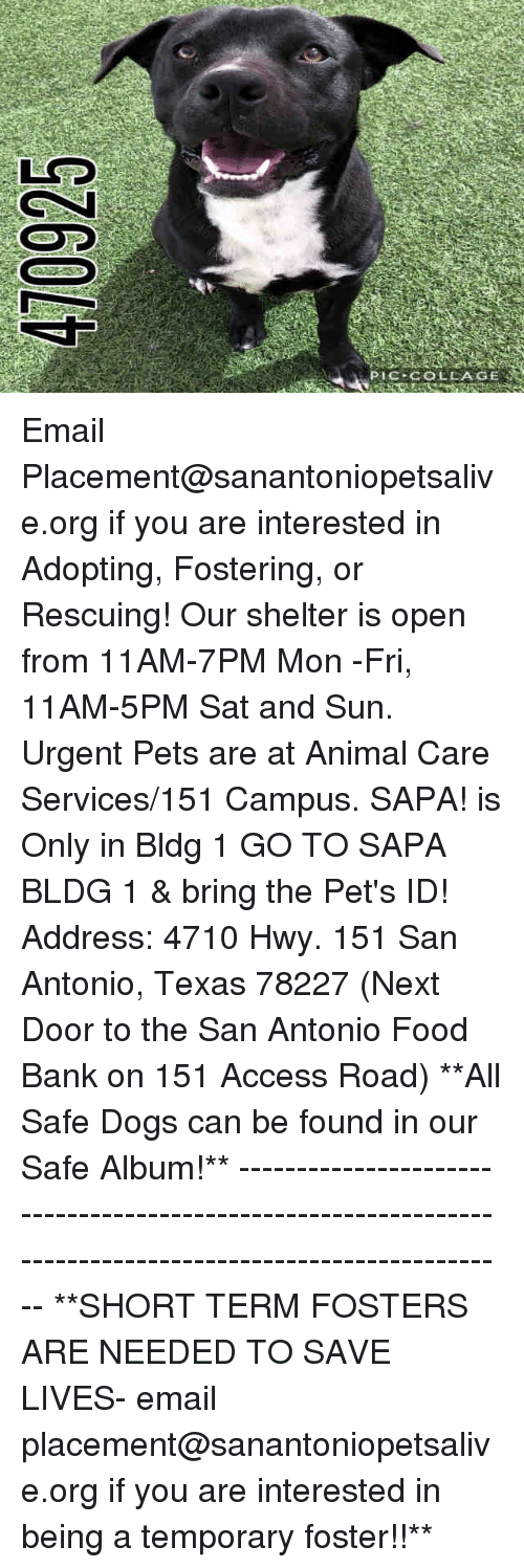 Dogs, Food, and Memes: PIC COLAGE Email Placement@sanantoniopetsalive.org if you are interested in Adopting, Fostering, or Rescuing!  Our shelter is open from 11AM-7PM Mon -Fri, 11AM-5PM Sat and Sun.  Urgent Pets are at Animal Care Services/151 Campus. SAPA! is Only in Bldg 1 GO TO SAPA BLDG 1 & bring the Pet's ID! Address: 4710 Hwy. 151 San Antonio, Texas 78227 (Next Door to the San Antonio Food Bank on 151 Access Road)  **All Safe Dogs can be found in our Safe Album!** ---------------------------------------------------------------------------------------------------------- **SHORT TERM FOSTERS ARE NEEDED TO SAVE LIVES- email placement@sanantoniopetsalive.org if you are interested in being a temporary foster!!**
