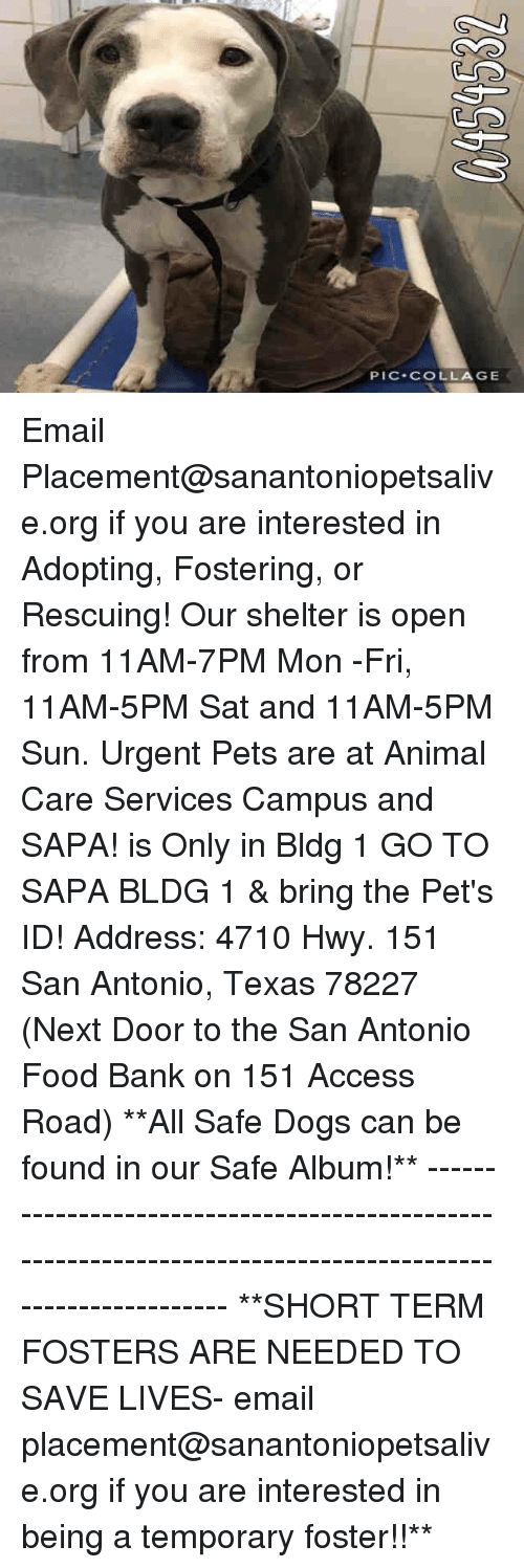 Dogs, Food, and Memes: PIC COLLAGE Email Placement@sanantoniopetsalive.org if you are interested in Adopting, Fostering, or Rescuing!  Our shelter is open from 11AM-7PM Mon -Fri, 11AM-5PM Sat and 11AM-5PM Sun.  Urgent Pets are at Animal Care Services Campus and SAPA! is Only in Bldg 1 GO TO SAPA BLDG 1 & bring the Pet's ID! Address: 4710 Hwy. 151 San Antonio, Texas 78227 (Next Door to the San Antonio Food Bank on 151 Access Road)  **All Safe Dogs can be found in our Safe Album!** ---------------------------------------------------------------------------------------------------------- **SHORT TERM FOSTERS ARE NEEDED TO SAVE LIVES- email placement@sanantoniopetsalive.org if you are interested in being a temporary foster!!**