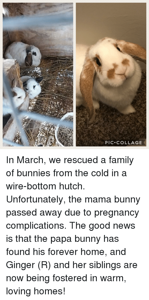 Bunnies, Family, and News: PIC COLLAGE