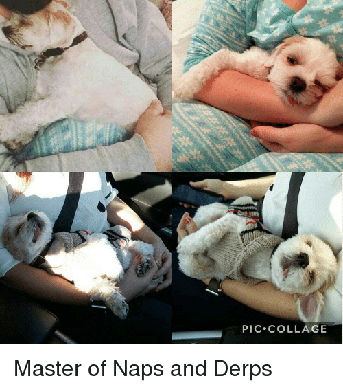 Christmas, Collage, and The Master: PIC COLLAGE Master of Naps and Derps