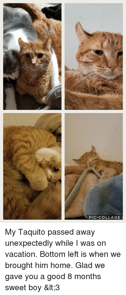 Collage, Good, and Home: PIC COLLAGE My Taquito passed away unexpectedly while I was on vacation. Bottom left is when we brought him home. Glad we gave you a good 8 months sweet boy <3