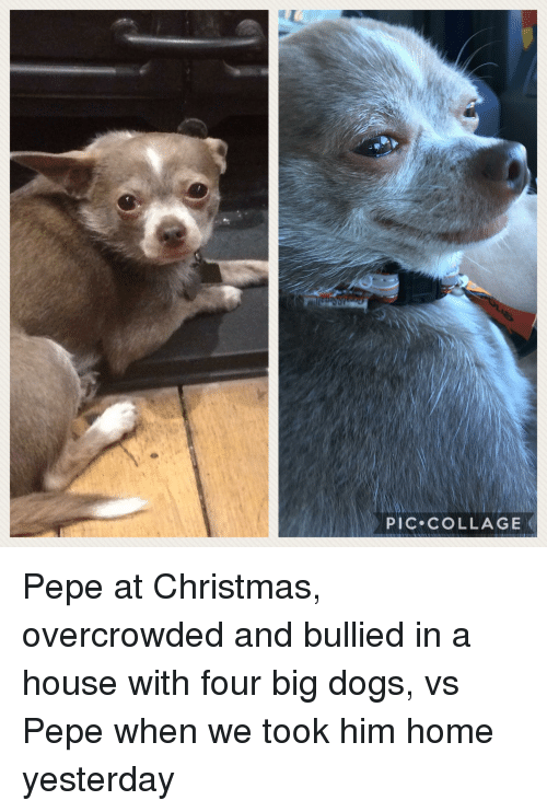 Christmas, Dogs, and Collage: PIC COLLAGE