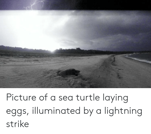 Lightning, Turtle, and Picture: Picture of a sea turtle laying eggs, illuminated by a lightning strike