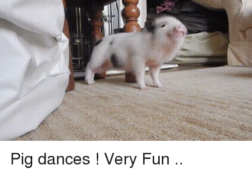 Funny, Fun, and Pig: Pig dances ! Very Fun ..