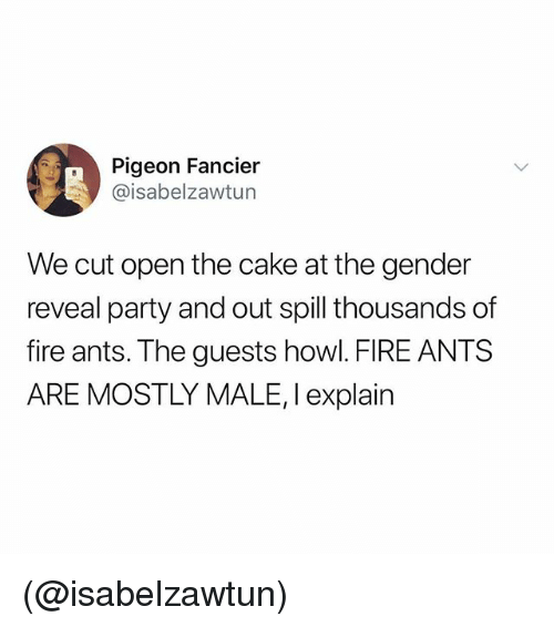 Fire, Party, and Cake: Pigeon Fancier  @isabelzawtun  We cut open the cake at the gender  reveal party and out spill thousands of  fire ants. The guests howl. FIRE ANTS  ARE MOSTLY MALE, I explain (@isabelzawtun)