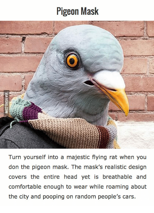pigeon mask turn yourself into a majestic flying rat when 16194931 25 best pigeon mask memes pidgeon mask memes, masked memes