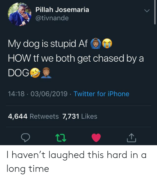 Af, Iphone, and Twitter: Pillah Josemaria  @tivnande  My dog is stupid Af  HOW tf we both get chased by a  DOG  14:18 03/06/2019 Twitter for iPhone  4,644 Retweets 7,731 Likes I haven't laughed this hard in a long time