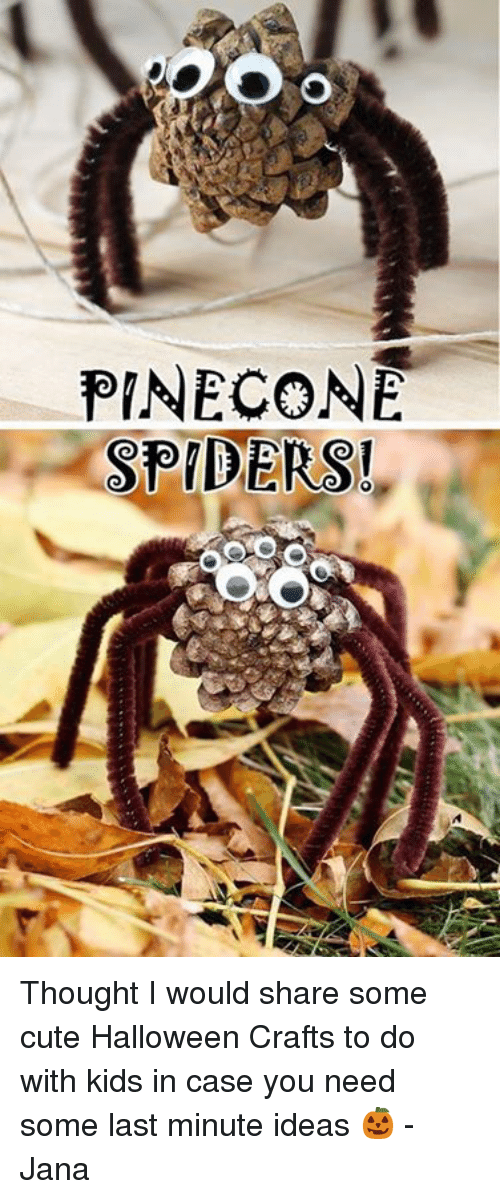 Pine Cone Spiders Thought I Would Share Some Cute Halloween