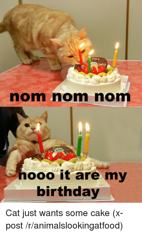 Birthday Cake And LOLcats PINo Nomm Norm Nooo It Are My