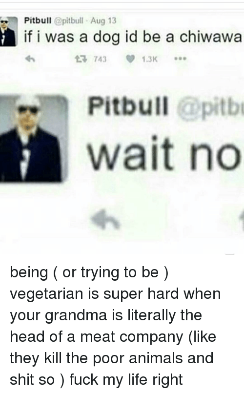 Grandma, Ironic, and Pitbull: Pitbull  pitbull Aug 13  if i was a dog id be a chiwawa  743 V 1.3K  Pitbull  @pitb  Wait no being ( or trying to be ) vegetarian is super hard when your grandma is literally the head of a meat company (like they kill the poor animals and shit so ) fuck my life right