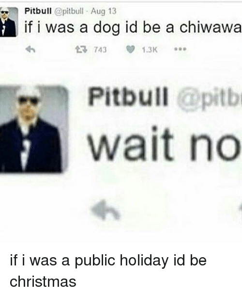 Christmas, Memes, and Pitbull: Pitbull @pitbull Aug 13  if i was a dog id be a chiwawa  743  1.3K  Pitbull @pitbi  wait no if i was a public holiday id be christmas