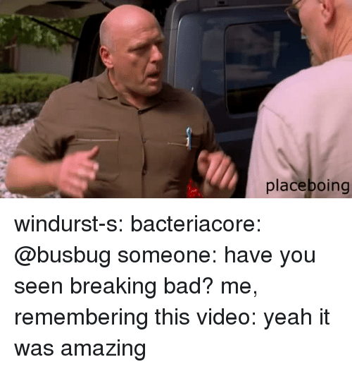Bad, Breaking Bad, and Tumblr: placeboing windurst-s:  bacteriacore:  @busbug   someone: have you seen breaking bad? me, remembering this video: yeah it was amazing