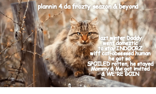 Winter, Got, and Car: plannin 4 da frozty seazon& beyond  lazt winter Daddy  went domeztic  to stay INDOORz  wiff car-obsessed human  he got so  SPOILED rotten, he stayed  Mommy & Me got invited