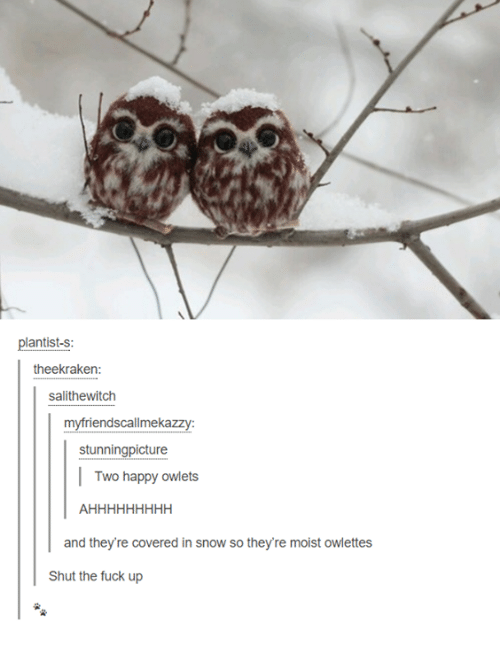 Fuck, Happy, and Snow: plantist-s:  theekraken  salithewitch  myfriendscallmekazzy  stunningpicture  Two happy owlets  and they're covered in snow so they're moist owlettes  Shut the fuck up