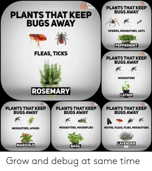 Plants That Keep Bugs Away Plants That Keep Bugs Away Spiders
