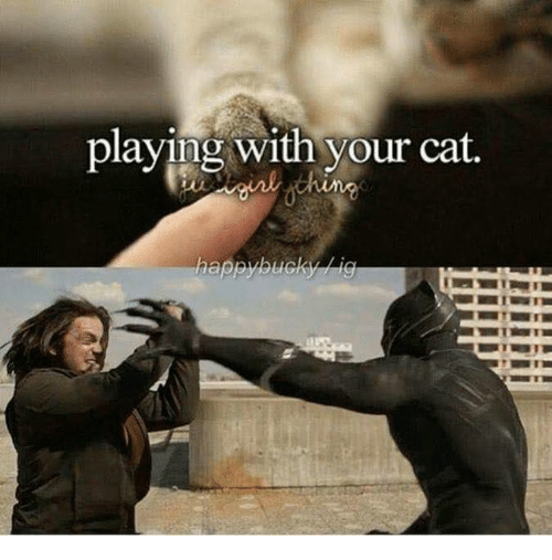 playing with your cat 31396592 playing with your cat cat meme on me me