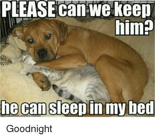 Please Can We Keep Him He Can Sleepin My Bed Goodnight Meme On Meme