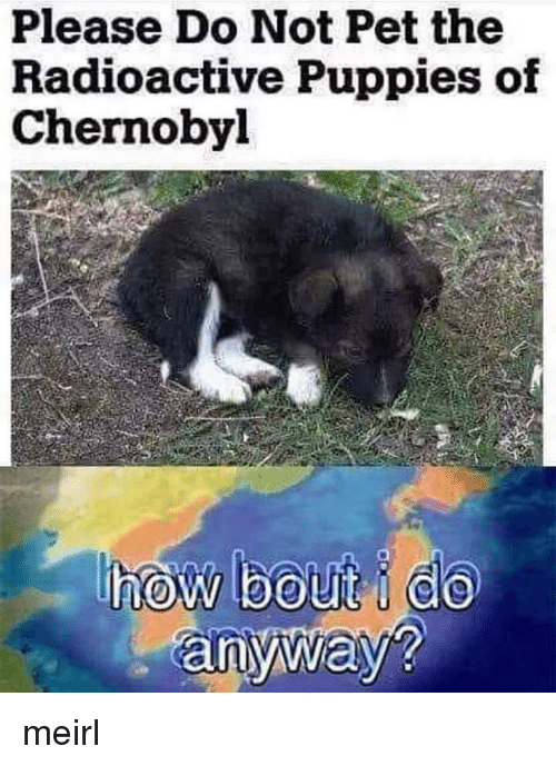 Puppies, MeIRL, and Chernobyl: Please Do Not Pet the  Radioactive Puppies of  Chernobyl  anyway? meirl
