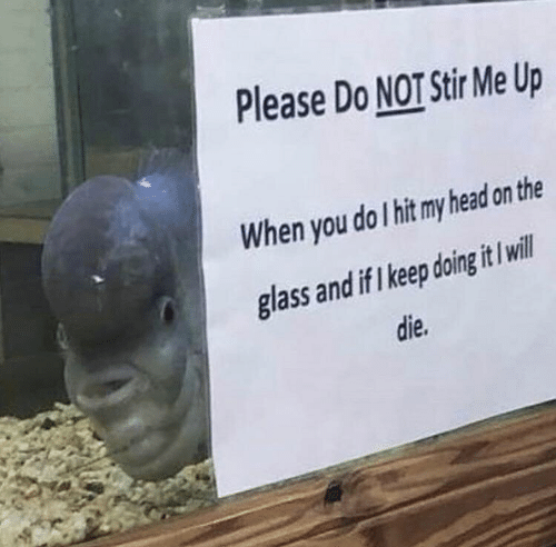 Head, Glass, and Will: Please Do NOT Stir Me Up  When you do I hit my head on the  glass and if I keep doing it I will  die.