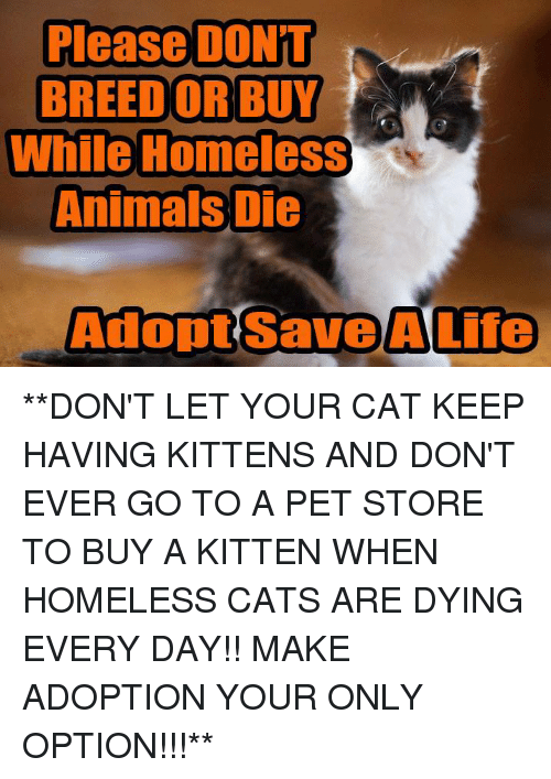 Please DONT BREED OR BUY While Homeless Animals Die Adopt Save a