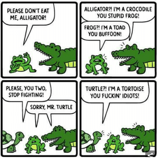 Memes, 🤖, and Toad: PLEASE DON'T EAT  ME, ALLIGATOR!  PLEASE, YOU TWO,  STOP FIGHTING!  SORRY, MR. TURTLE  ALLIGATOR?! I'M A CROCODILE  YOU STUPID FROG!  FROG I'M A TOAD  YOU BUFFOON!  TURTLE?! I'M A TORTOISE  YOU FUCKIN' IDIOTS!