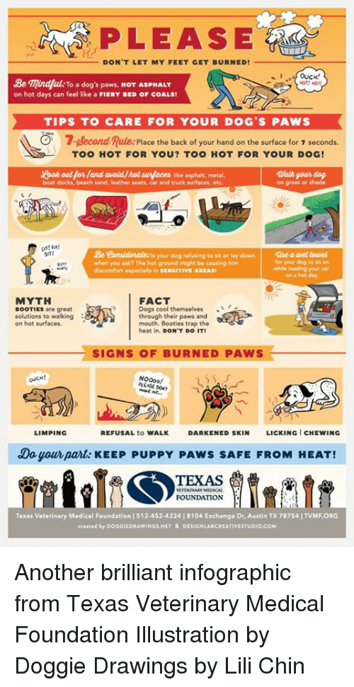 Dogs, Memes, and Shade: PLEASE  DON'T LET MY FEET GET BURNED!  OUCH!  Be mindp  on hot days can feel like a FIERY BED OF COALS  ulk To a dog's paws, HOT ASPHALT  TIPS TO CARE FOR YOUR DOG'S PAWS  7-slecond Rule:Placo the back of your hand on the surface for  7 seconds.  TOO HOT FOR YOU? TOO HOT FOR YOUR DOG!  boat docks, beach sand, leather seats, car and truck surfaces, etc  on grass or shade  Leenaidelate: is your dog refusing to sit or lay down  when you ask? The hot ground might be causing him  discomfort especially in SENSITIVE AREAS  SiT!  丨  仏e auetowel  for your dog to sit or  while loading your car  on a hot day  MYTH  FACT  Dogs cool themselves  through their paws and  mouth. Booties trap the  heat in. DON'T DO IT  BOOTIES are great  solutions to walking  on hot surfaces.  SIGNS OF BURNED PAWS  LIMPING  REFUSAL to WALK  DARKENED SKIN  LICKING I CHEWING  Do your part: KEEP PUPPY PAWS SAFE FROM HEAT!  TEXAS  VTERENARY MENCAL  FOUNDATION  Texas Veterinary Medical Foundation | 512-452-42241 8104 Exchange Dr, Austin TX 78754 | TVME ORG  crested by DOGGIEDRAWINGS.NET&DESIGNLABCREATIVESTUDIO.cOM Another brilliant infographic from Texas Veterinary Medical Foundation   Illustration by Doggie Drawings by Lili Chin
