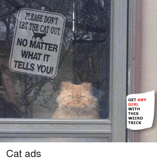 Reddit, Weird, and Girl: PLEASE DONT  LET THE CAT OUT  NO MATTER  WHAT IT  TELLS YOU!  0  GET ANY  GIRL  WITH  THIS  WEIRD  TRICK