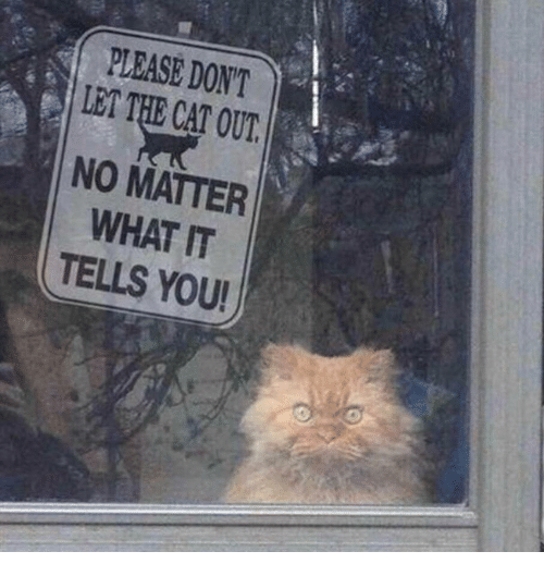 Cat, You, and What: PLEASE DONT  LET THE CAT OUT  NO MATTER  WHAT IT  TELLS YOU