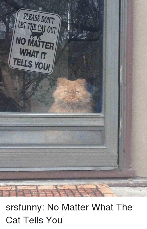 Tumblr, Blog, and Http: PLEASE DON'T  LET THE CAT OUT  NO MATTER  WHAT IT  TELLS YOU srsfunny:  No Matter What The Cat Tells You