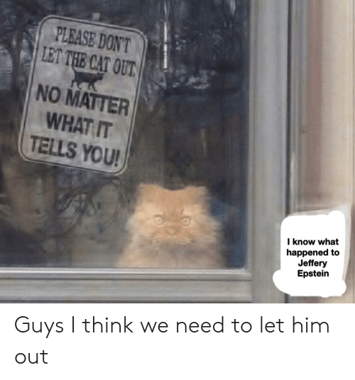 Cat, Him, and Think: PLEASE DON'T  LET THE CAT OUT  NO MATTER  WHAT IT  TELLS YOU!  I know what  happened to  Jeffery  Epstein Guys I think we need to let him out