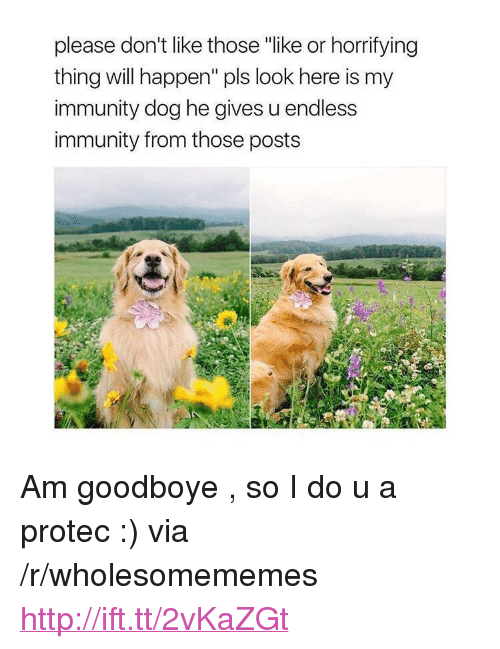 """Http, Dog, and Via: please don't like those """"like or horrifying  thing will happen"""" pls look here is my  immunity dog he gives u endless  immunity from those posts <p>Am goodboye , so I do u a protec :) via /r/wholesomememes <a href=""""http://ift.tt/2vKaZGt"""">http://ift.tt/2vKaZGt</a></p>"""